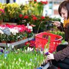 World of Flowers's Pinterest Account Avatar