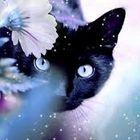 Rebecca Dowdeswell's Pinterest Account Avatar