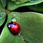 Bug Cannon Pinterest Account