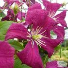 Gardenia Specosa Pinterest Account