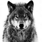 HunterWolf Pinterest Account