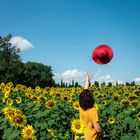 Red Fedora Diary | Travel Blog Pinterest Account