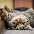 cat Pinterest Account