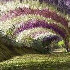 Amie Medeiros botanic Pinterest Account