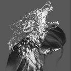 Wild2Inspirations Pinterest Account