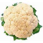 Köstlicher Blumenkohl Pinterest Account