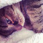 Steph GuLie Pinterest Account