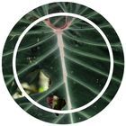 Sustainable Jungle   Sustainable Living & Zero Waste instagram Account