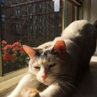 anna 🧸✨🌌🌿🔮 instagram Account