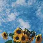 Júlia🦋✨ Pinterest Account