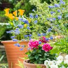 Adele's Gardening Tips Pinterest Account