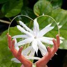 Flowers In Heart Pinterest Account