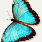 Susan Frusher's Pinterest Account Avatar