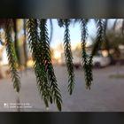 Stringz💫 Pinterest Account
