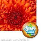 Chrysanthemum Pinterest Account