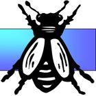 BeeLineIndustries.com instagram Account