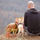 Tips For Dog Obedience Training