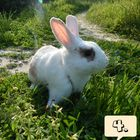 rabbit mammal  instagram Account