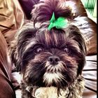 Meish * Pinterest Account