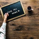 CutePetName Pinterest Account