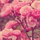 bessan Ammaya Pinterest Account