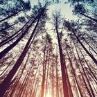 Giana Elise's Pinterest Account Avatar
