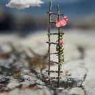 Hadil Bazine Pinterest Account