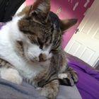 Olivia Messham instagram Account