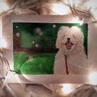 Wilsons' Pet Palette Pinterest Account