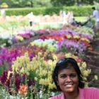 Deepa Shankar Pinterest Account