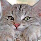 Anneliese Akdora Pinterest Account