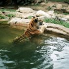 Zoos in Photos Pinterest Account