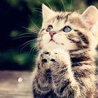 we-love-cats-club Pinterest Account
