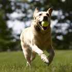 Great Lakes Pet Fencing LLC Pinterest Account
