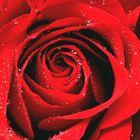 Maria Rosa Pinterest Account