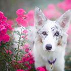 Dogfresse Pinterest Account