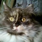 Olga_Margo_Rums's profile picture