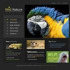Chicago Web Design Studio Pinterest Account