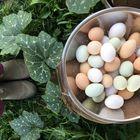 Family Food Garden Pinterest Account