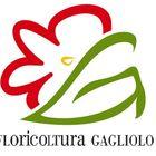 Floricoltura Gagliolo Pinterest Account