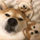 Dog Ideas  Pinterest Account