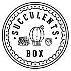 SucculentsBox Pinterest Account