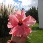 Montse López Pinterest Account