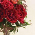 Zoie Fitzsimmons Pinterest Account