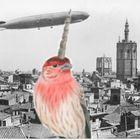 Unibird Vintage Pinterest Account
