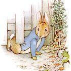 The Rabbit Pinterest Account