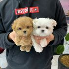 Wee Puppies 🐻 Pinterest Account