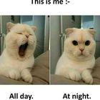 funny memes's Pinterest Account Avatar