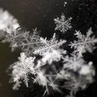 snowflakes Pinterest Account