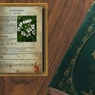 the lost book of remedies Pinterest Account